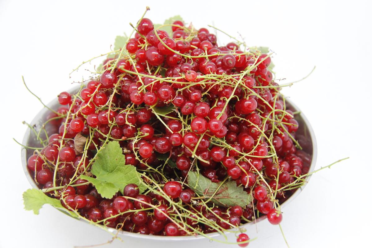 Ягоды для желе из красной смородины на зиму
