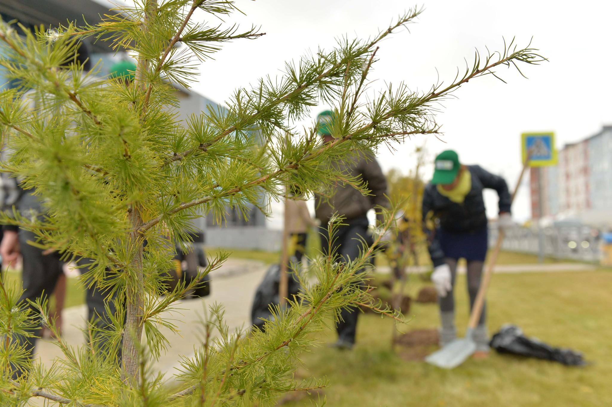 Молодежь сажают деревья