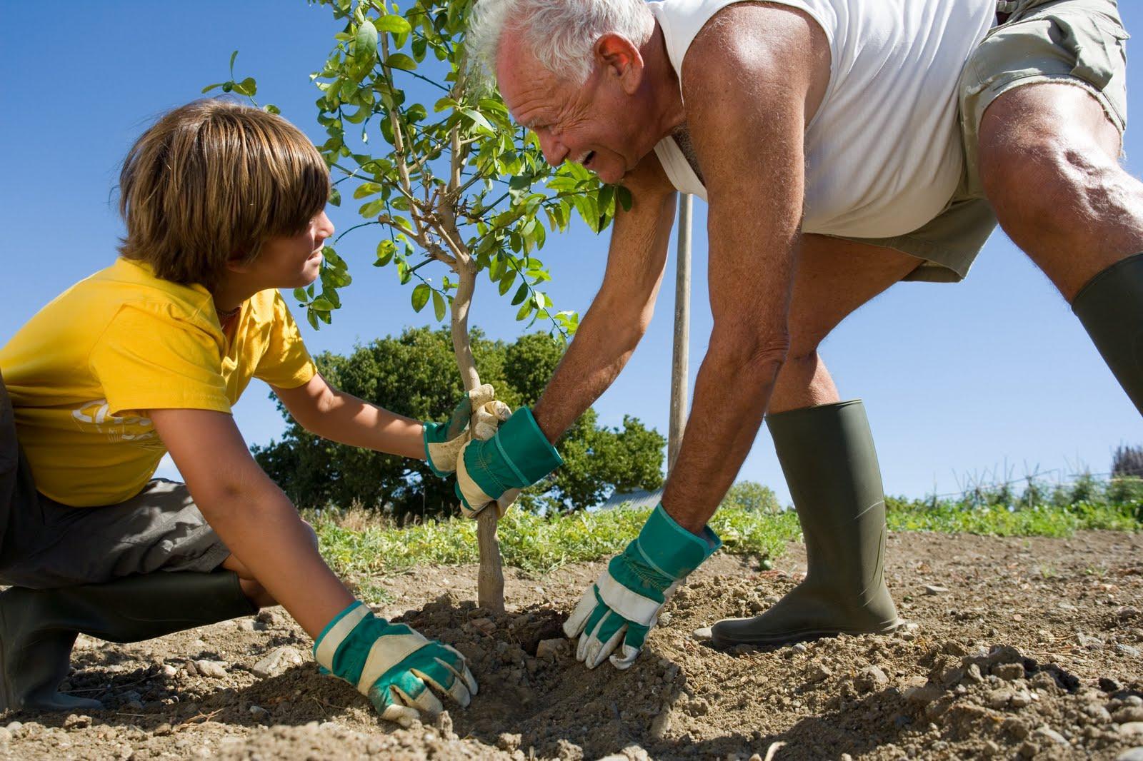 Можно ли сажать плодовые деревья в огороде 16