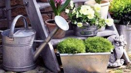 Растения фото