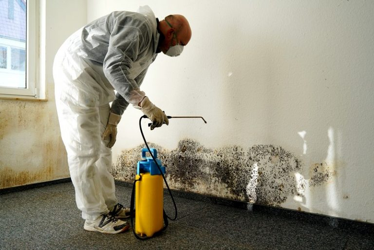 Чем вывести плесень на стенах в квартире своими руками