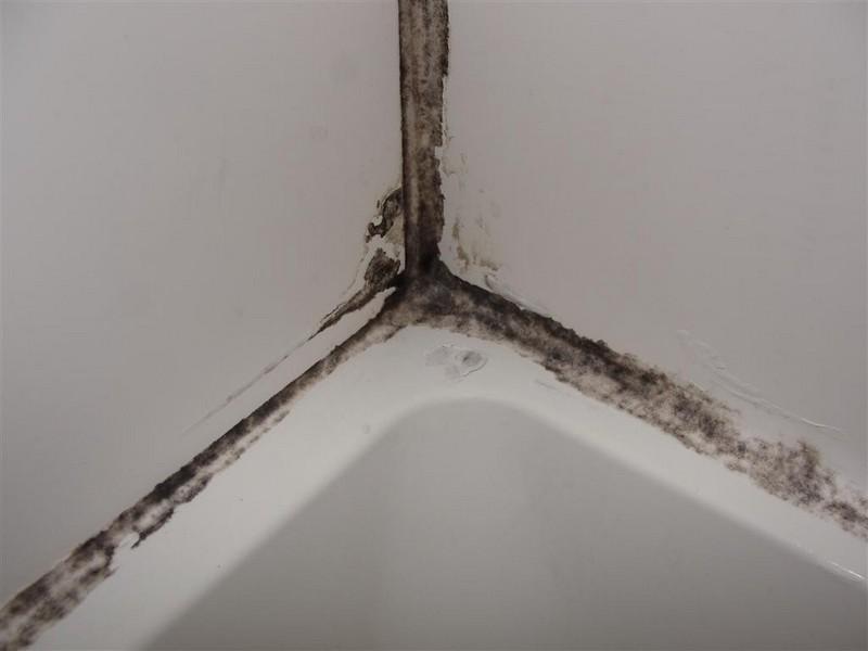 Черная плесень на стенах и потолке