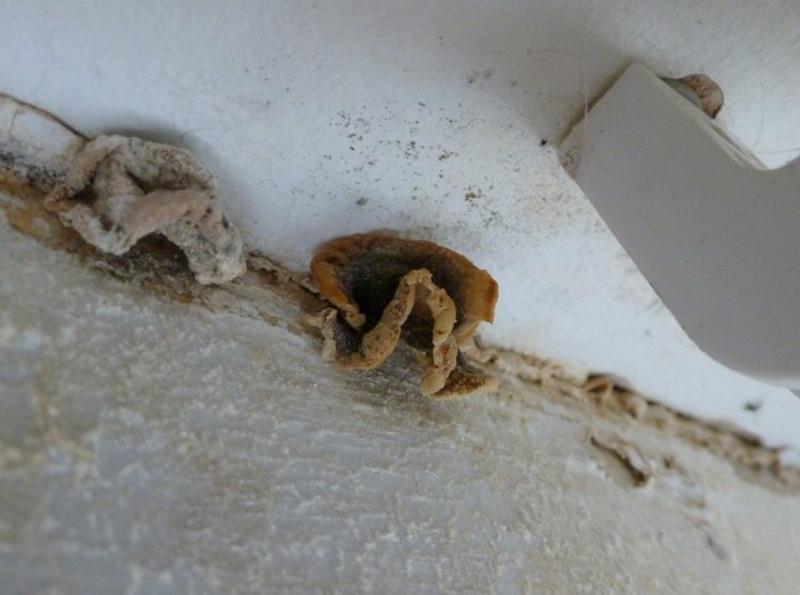 Появление грибка на стене