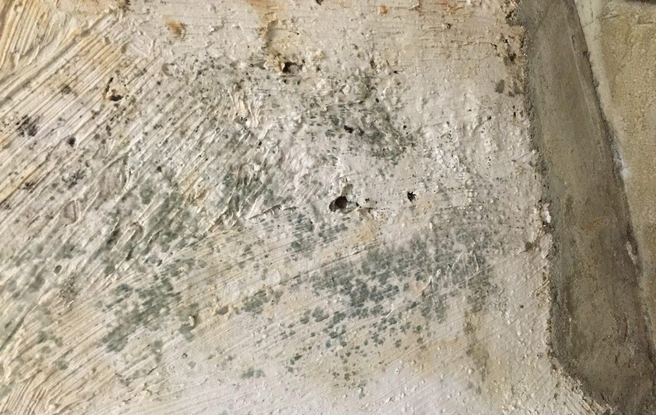 Образование плесени на бетонной стене