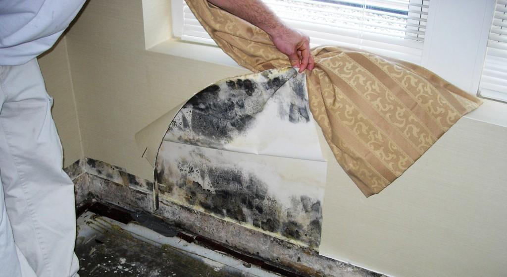 Как убрать плесень в ванной комнате на стенах своими руками 68