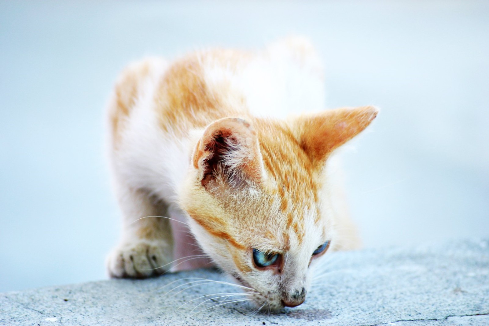 Проблема запаха кошачьей мочи
