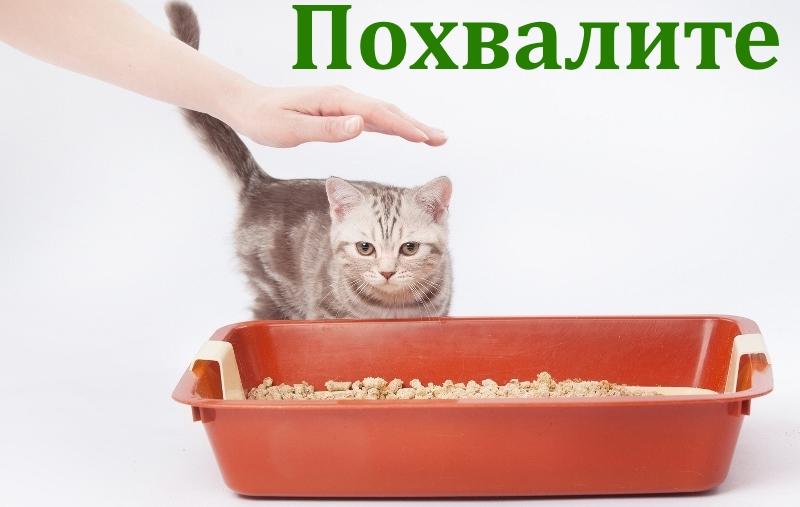 Похвала котенка