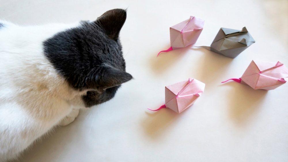 Как сделать мышку для кошек своими руками из бумаги
