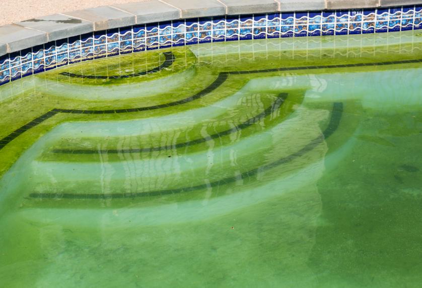 Позеленение воды в бассейне