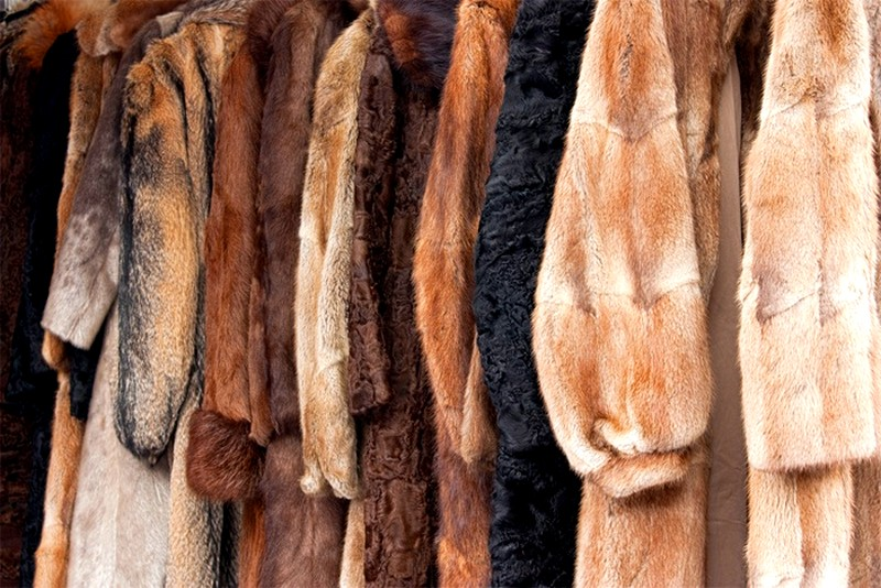 animals used for fur clothing