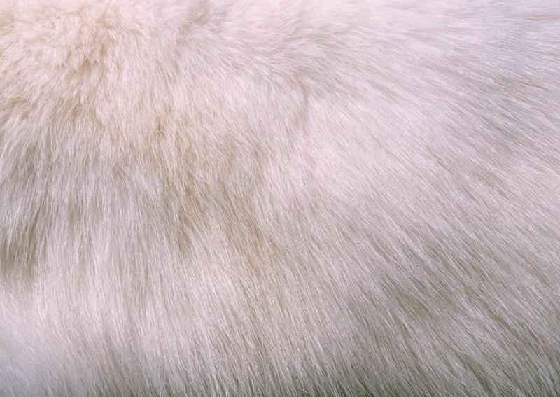 Пожелтение белого меха