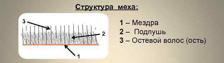 Структура меха