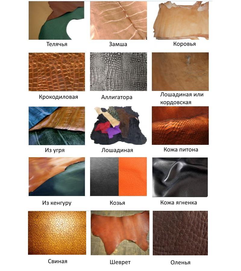 Виды натуральной кожи