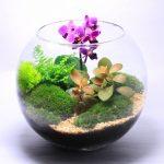 Фото 68: Флорариум с орхидеей