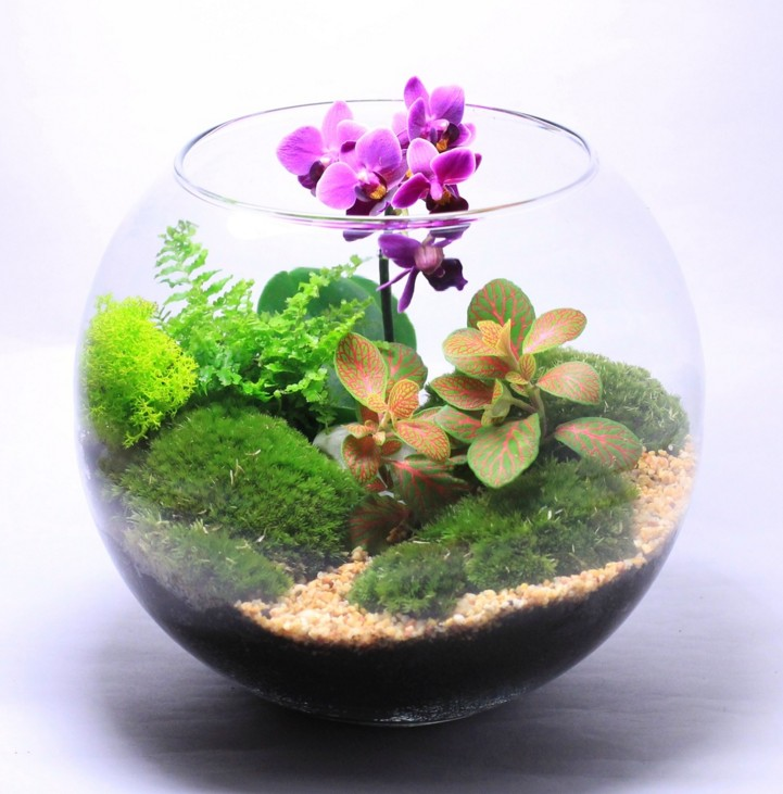 Флорариум с орхидеей