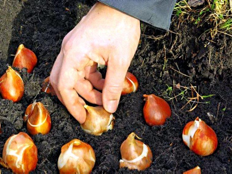 На рассаде перца опадают листья