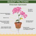Фото 80: Опасные признаки комнатных растений