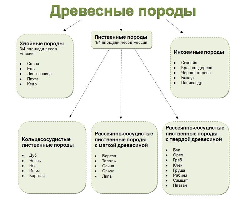 Типы древесных пород
