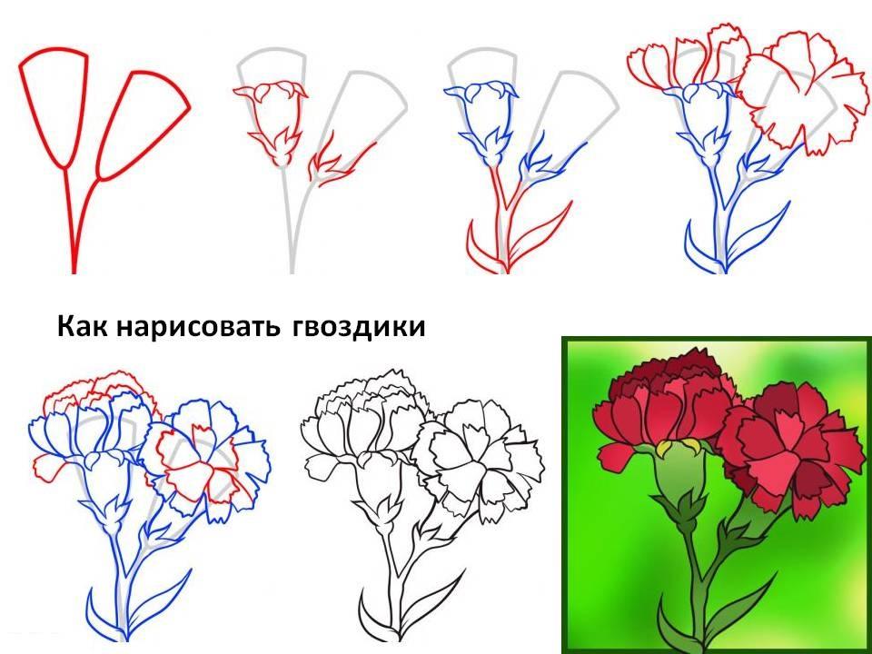 Как нарисовать гвоздику