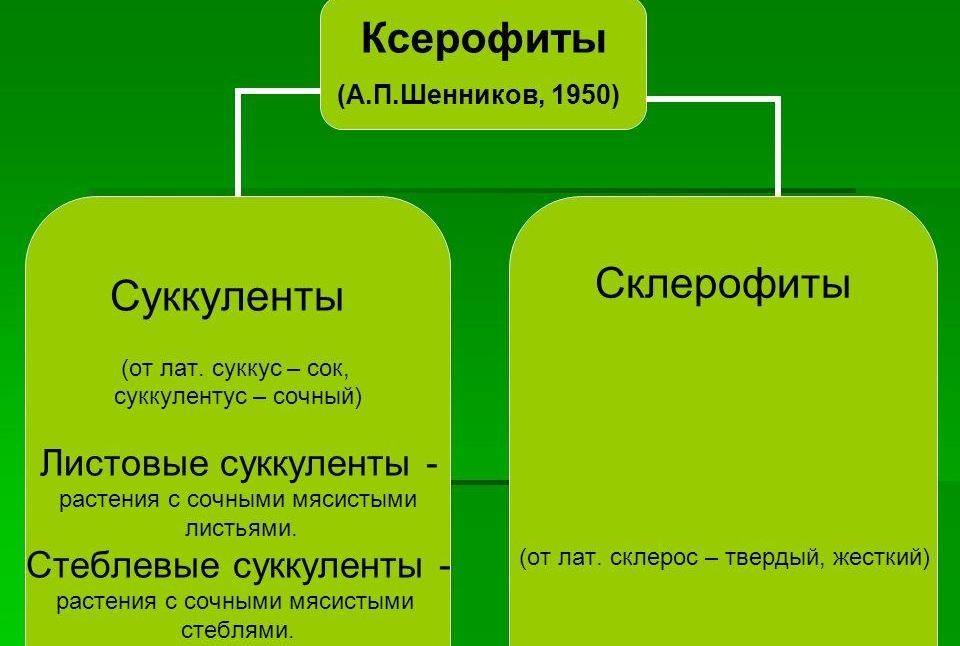 Классификация ксерофитов
