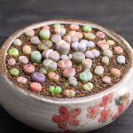 Фото 122: Цветовое Разнообразие литопсов