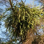 Фото 6: Тропические кактусы