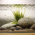 Фото 55: Булыжники в аквариуме