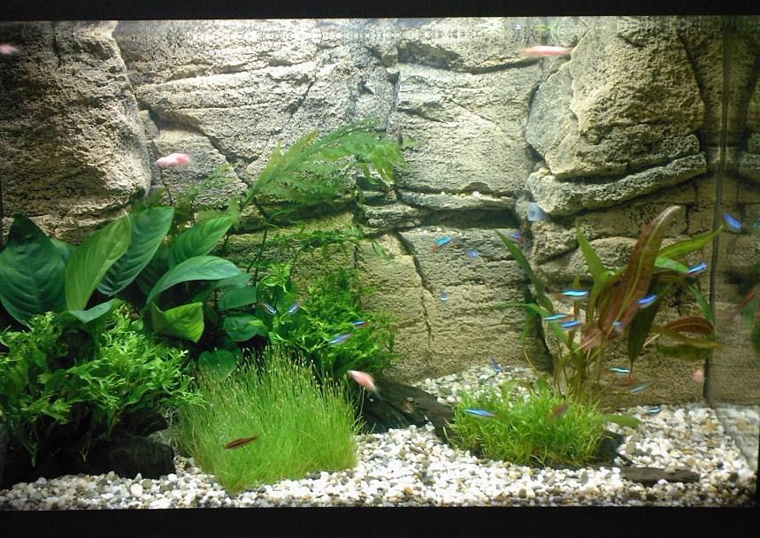 Каменный фон для аквариума