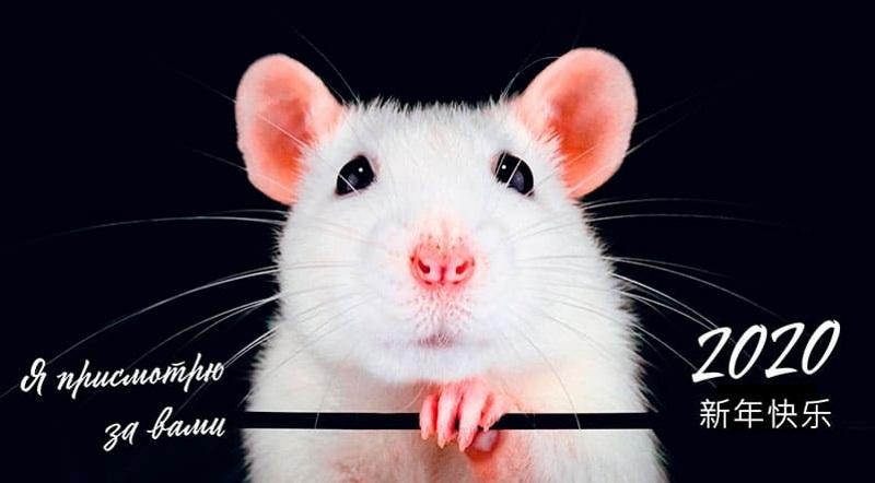 Символ 2020 Года — Белая Металлическая Крыса