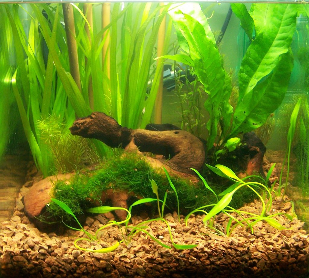 Оформление дна аквариума камушками