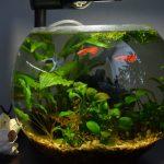 Фото 8: Круглый аквариум