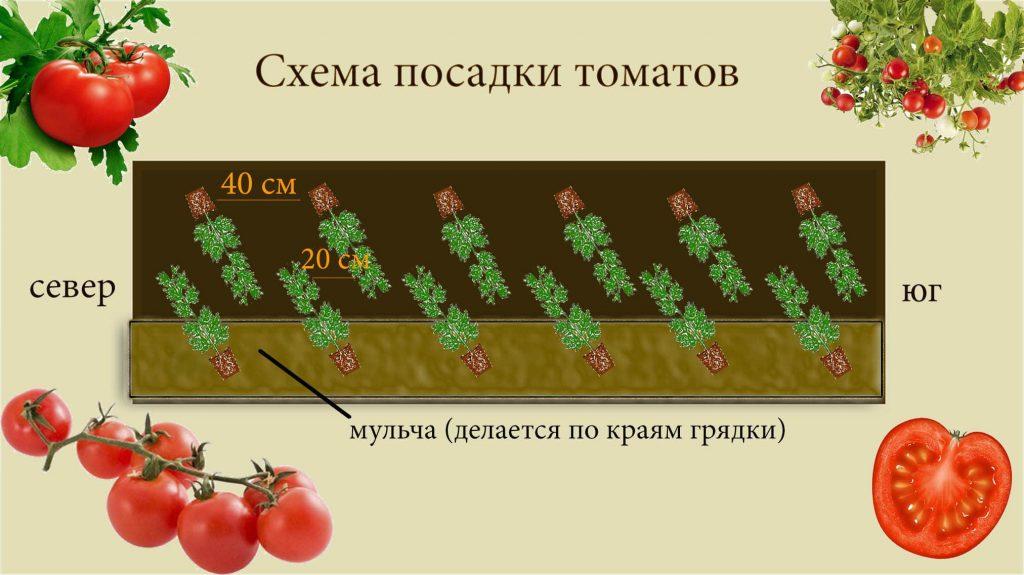 Расстояние при посадке между томатами