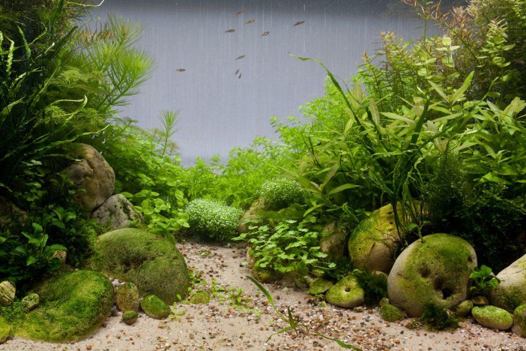 Совместимость растений в аквариуме