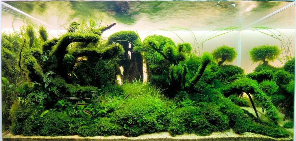 Природный стиль аквариума