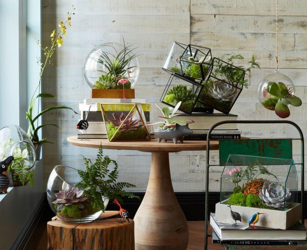 Флорариум для растений своими руками фото 286