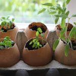 Фото 59: Травы в яичной скорлупе