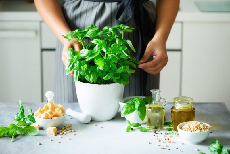 польза базилика для кормящих