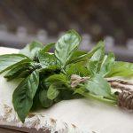 Фото 33: пучок зеленого базилика