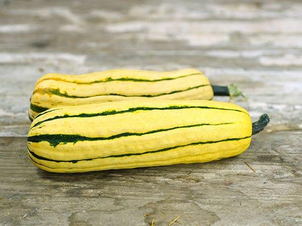 Деликатесный сорт кабачков