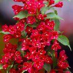 Фото 12: Ярко красный цветок