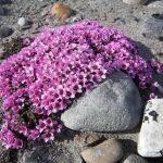 Фото 14: Фиолетовые лепестки цветка