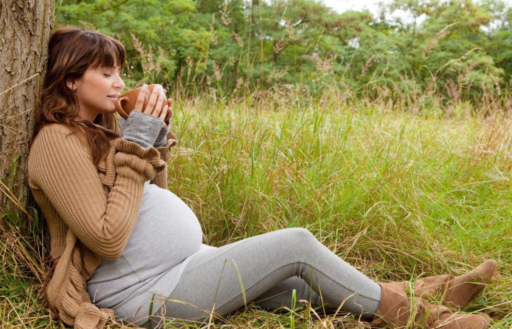 Полезные свойства череды для беременных женщин