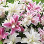 Фото 16: садовые цветы