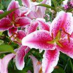 Фото 17: прекрасные цветы