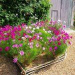 Фото 20: Какие цветы сажать в цветник