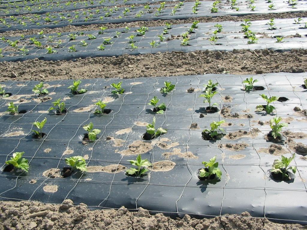 Прочное качество геотекстиля - использование для сада