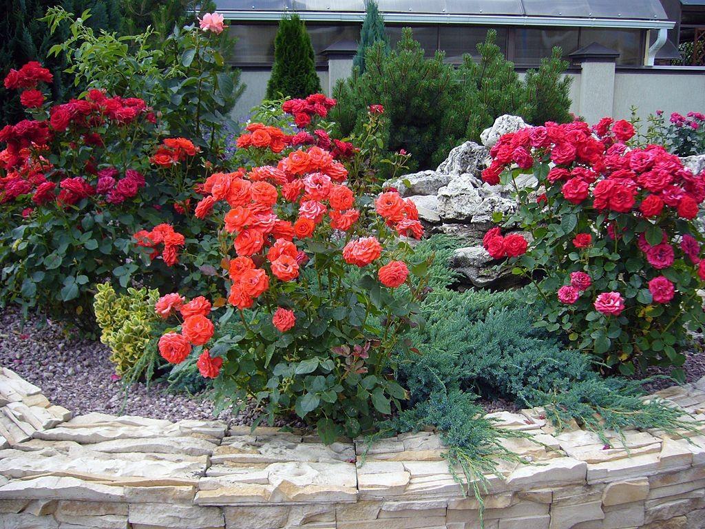Цветники с розами всегда в моде