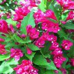 Фото 50: Гибридный цветок