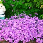 Фото 16: Многолетние цветы