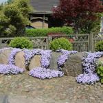 Фото 25: Цветы на камнях